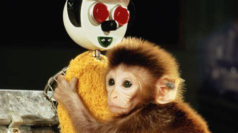 Animal Babies Feature Monkey Jumpin Lil Monkeys Girl