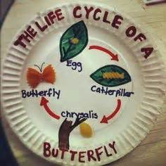 butterfly life cycle paper plate toy craft free fjextange template butterfly life cycle paper plate craft life cycles for