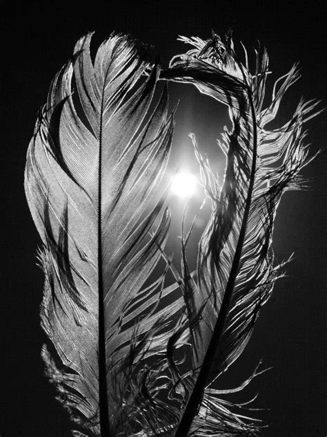 Feathers The Sun Fine Art Photography Wall