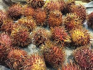 Take a Walk on the Wild Side: Exotic Fruit at Nino's