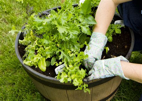 vegetable container gardening  started