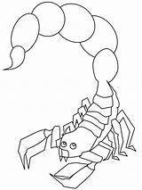 Scorpion Coloring Pages Scorpio Animal Printable Outline Print Animals Drawing Scorpions Colouring Books Sheets Insects Desert Children Adults sketch template