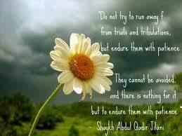 Sayings of Shei... Al Jilani Quotes
