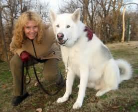 White Alaskan Malamute Wolf Hybrid