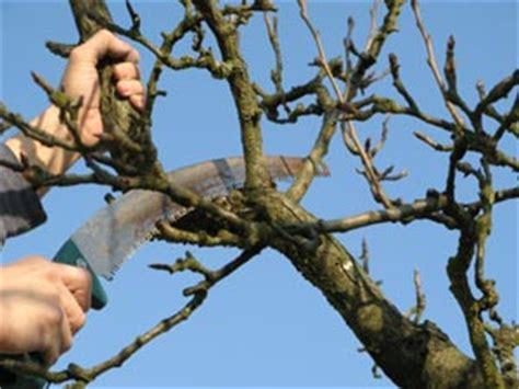 recettes cuisine bio taille de restauration d 39 un arbre fruitier
