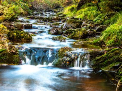 Mountain Stream Water Rocks Rocks Green Moss Grass Forest