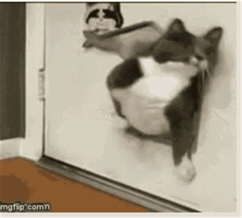 fat cat gif  gif images