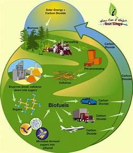 Biofuels   How Can I Help?