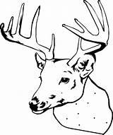 Deer Coloring Pages Printable Elk Head Buck Hunting Clipart Doe Simple Getcolorings Realistic Sheet Line Clipartmag Awesome Template Bear Getdrawings sketch template