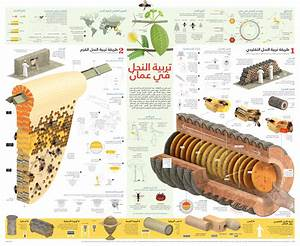 Beekeeping in Oman - Visualoop