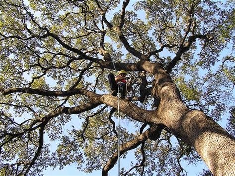 Tree Service Jacksonville Fl  Tree Removal Jacksonville. Louisville Paving Company Buy Diamonds Rings. Reg D Private Placement Htc One X Disassembly. Chapter 7 Bankruptcy Colorado. No Customer Service Telkomsel. Stop Foreclosure Miami Top Plumbing Companies. Hvac Load Calculation Formula. Pest Control Fort Collins Insurance Naples Fl. Waterloo University Application