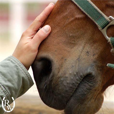 horse loyal cavalli citazioni horses loyalty comes standard story