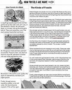 How Fossils Are Made This One Page Handout Explains How
