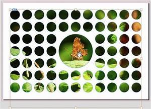 Bild Rahmen Lassen : ein bild in mehreren indesign rahmen platzieren ~ Yasmunasinghe.com Haus und Dekorationen