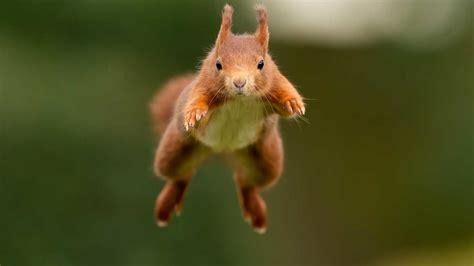 photograph squirrels camera jabber