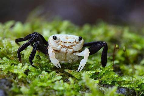 crab mountain   rain forest dennerle