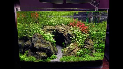 How To Aquascape A Planted Tank by 15 Gal Planted Tank The Cave