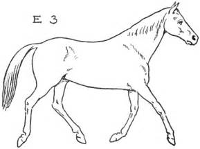 How to Draw Horses Step by Step