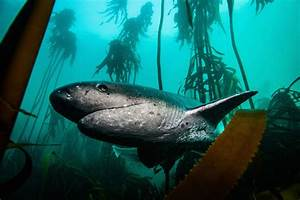 Diving With Cow Sharks - Scuba Shack Cape Town