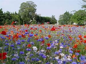 champs fleuris chainimage With champ de fleur tapis