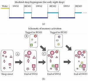 Model Of The Neurophysiological Basis Of Sleep U2019s Function