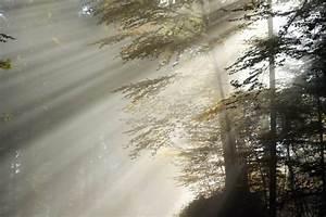 Rasen Düngen Bei Sonne : kostenlose bild wald sonne tag zweig nebel natur rasen holz ~ Indierocktalk.com Haus und Dekorationen