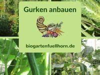 Wie Wachsen Gurken : die 101 besten bilder von gurken pflanzen in 2019 garten gartenarbeit und gem sebeet ~ Eleganceandgraceweddings.com Haus und Dekorationen