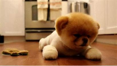 Puppy Dog Gifs Animals Hey Animal Puppies