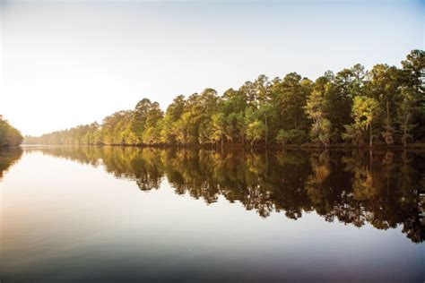 state parks  east texas houstonia