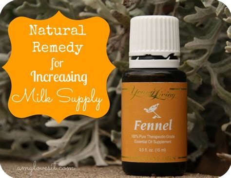 young living fennel essential oil  memperlancar