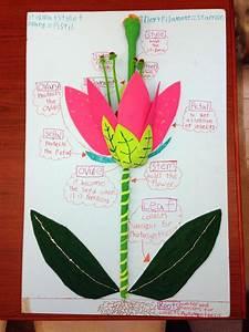 Diagram  Kindergarten Flower Diagram