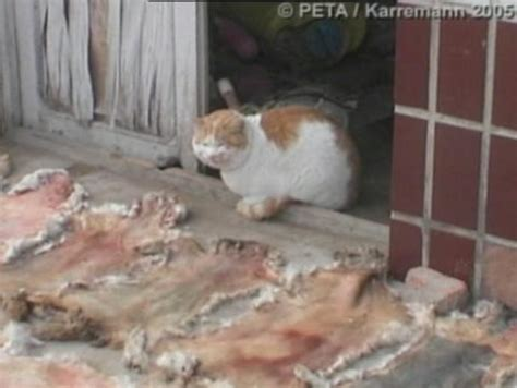china dog  cat fur market investigation peta