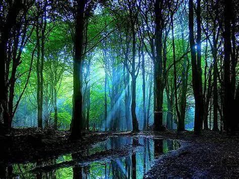 The Magic Of Wood And Light by Magical Woods Magical Scenery Scenery Nature