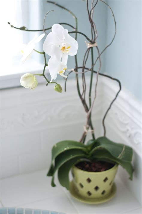 how do i care for an orchid after it blooms how to care for orchids via censational girl even the easy ones that i can still kill