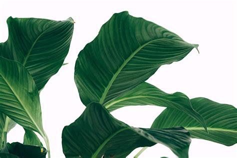 aesthetic minimalist plant desktop wallpapers