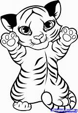 Coloring Tiger Pages Baby Cute Popular sketch template