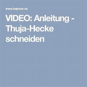Thuja Hecke Schneiden Doch Wieviel : die besten 25 thuja hecke schneiden ideen auf pinterest ~ Lizthompson.info Haus und Dekorationen