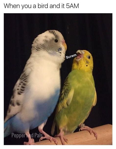Pin By Lagoave On Community Funny Parrots Funny Birds