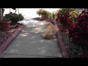 Bad Dog gets scolding - YouTube
