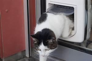 Katzenklappe Für Fenster : katzenklappe einbauen katzent re in fenster einbauen ~ A.2002-acura-tl-radio.info Haus und Dekorationen