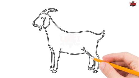 huge collection  goat drawing pictures
