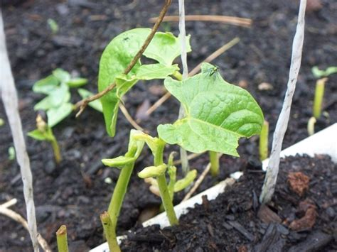 11 Organic Pest Control In Vegetable Gardens Grandma's