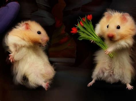 Myxer Wallpapers Animals - animals and flowers wallpapers high quality free
