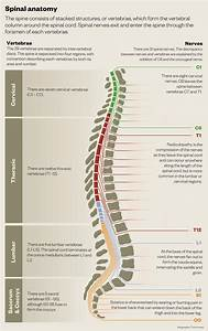 Spinal Surgery  An Overview
