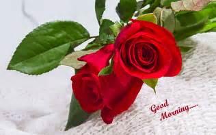 Good Morning Beautiful Rose Flowers