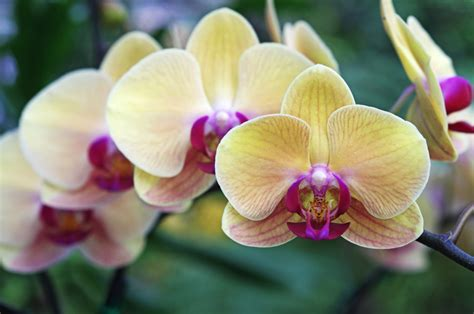 types of orchids the different types of orchids garden lovers club
