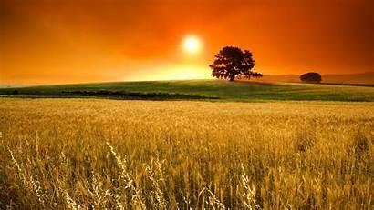 Wallpapers Cornfield Sunset Summer Sabbath 1366 768