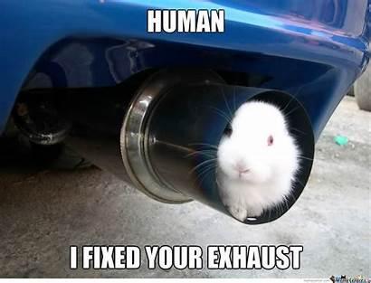 Rabbit Exhaust Meme Fixed Funny Memes Human