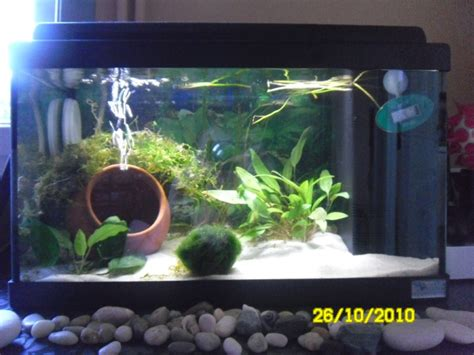 aquarium communautaire 20l