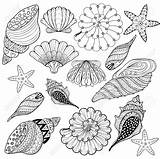 Coloring Pages Zentangle Shell Seashell Sea Seashells Drawing Conch Line Silhouette Printable Shells Gangster Getdrawings Adult Illustration Simple Vector Getcolorings sketch template